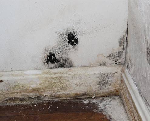 Patches of black mold on a white wall in a home